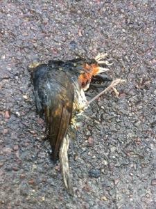 A dead bird